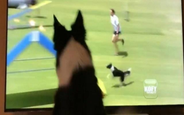 #Video Perrita se emociona viéndose en televisión - Captura de pantalla
