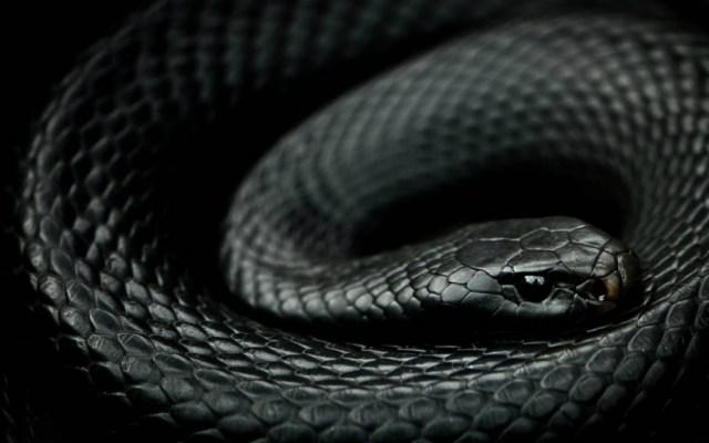 Científico de la UNAM crea antiveneno contra mordeduras de serpientes - Foto de UNAM