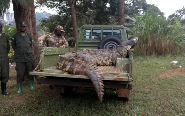 Cocodrilo se come a mujer y a su bebé en lago de Uganda - Foto de @ugwildlife