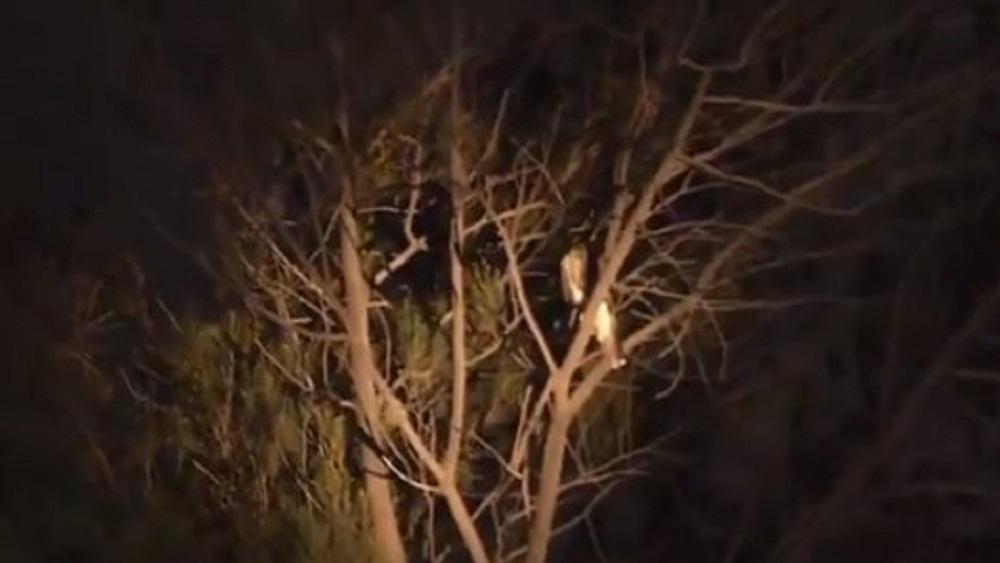 #Video Bomberos fallan al rescatar halcón en la Doctores. Noticias en tiempo real