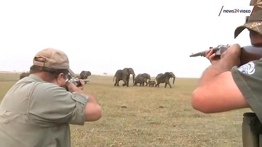 Mataron a un elefante y la familia del animal quiso cobrarse venganza