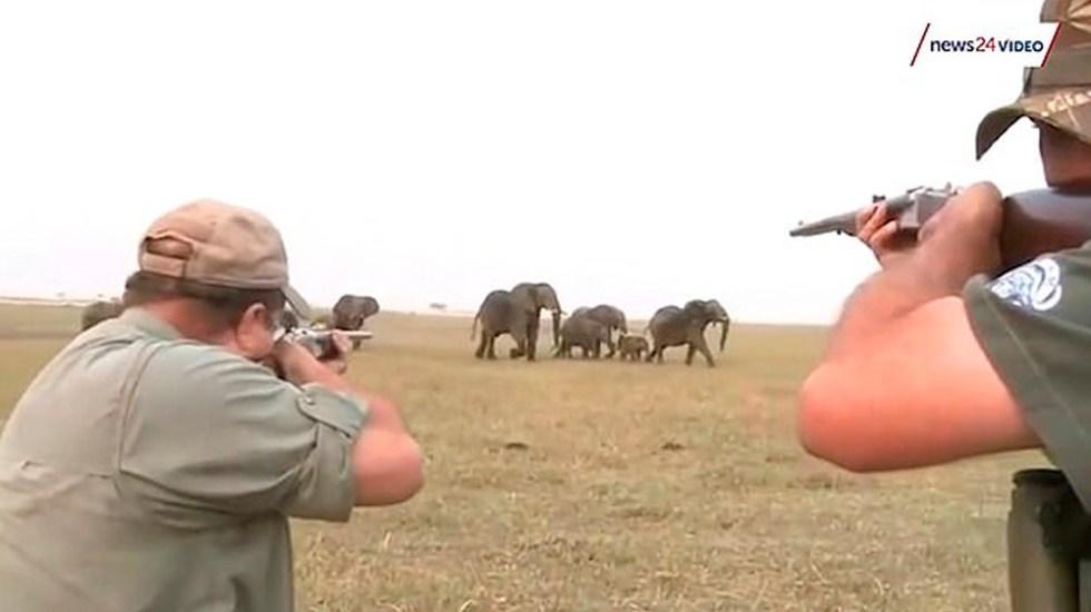 #Video Manada persigue a cazadores tras dispararle a elefante