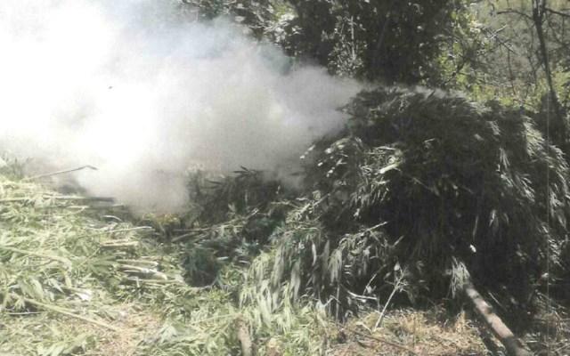 Encuentran más de 77 mil plantas de mariguana en Jalisco - Foto de PGR
