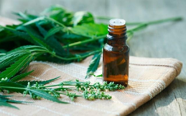 Cofepris alista lineamientos para comercializar cannabis - El lunes se conocerán los lineamientos para la mariguana medicinal. Foto de Internet