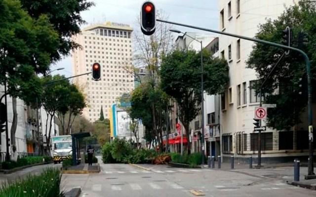 Cae árbol en la colonia Centro - Foto de @kool_3r4