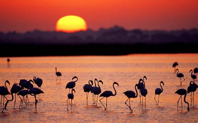 Humanos desaparecerán el 90 por ciento de la biodiversidad - La WWF llama al próximo gobierno de México a actuar en favor de la biodiversidad. Foto de WWF España