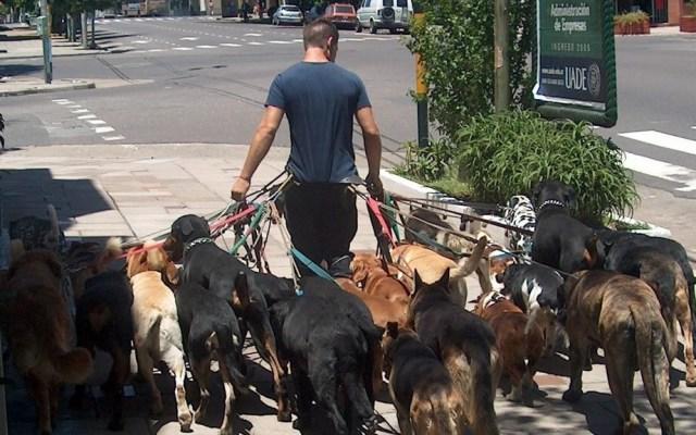 Se hacen pasar por cuidadores para robar perros - Foto de Internet