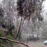Declaran emergencia en 17 municipios de Puebla por helada - Foto de Notimex