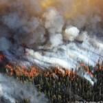 Aumenta a 44 el número de muertos por incendios en California - Foto de @CAL_FIRE
