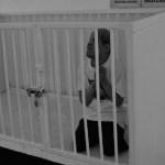 INAI decide publicar expediente de abusos en casa hogar de la CDMX - La Casa Hogar Esperanza fue denunciada por presuntos abusos contra personas discapacitadas. Foto de Internet