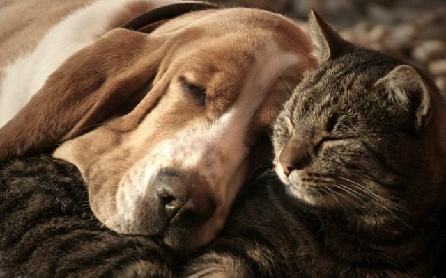 ¿Cómo proteger a nuestras mascotas en epoca navideña? - Foto de Seresto
