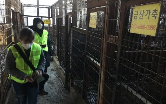 Cierran el mayor matadero de perros en Corea del Sur - Matadero Taepyeong-dong en Corea del Sur. Foto de Humane Society