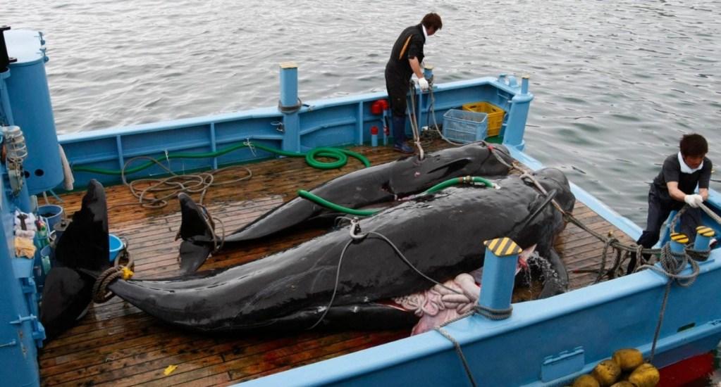 Japón se sale de la Comisión Ballenera y reanudará la caza comercial - Foto de Reuters