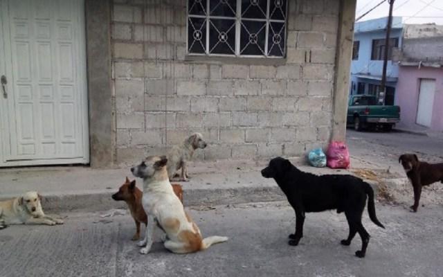 Maltrato animal costará 24 mil pesos a infractores en Pachuca - Mascotas estarán protegidas contra el maltrato animal en Pachuca. Foto de Internet