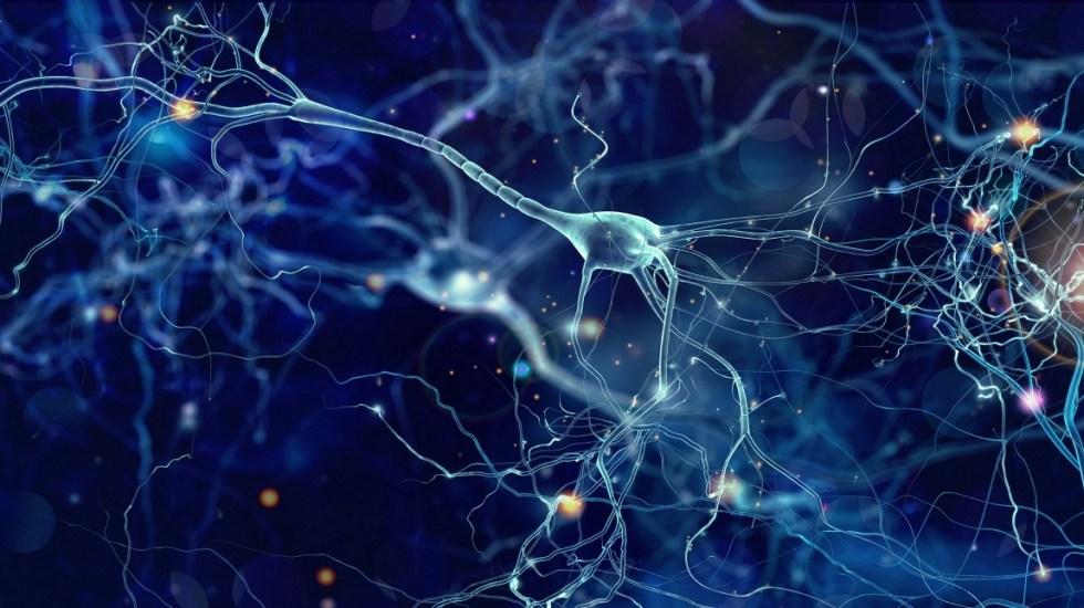 Científicos chinos revelan proyecto de mapa cerebral en 3D - Científicos chinos lograrían el más detallado mapa cerebral en 3D en hasta diez años. Foto de Internet