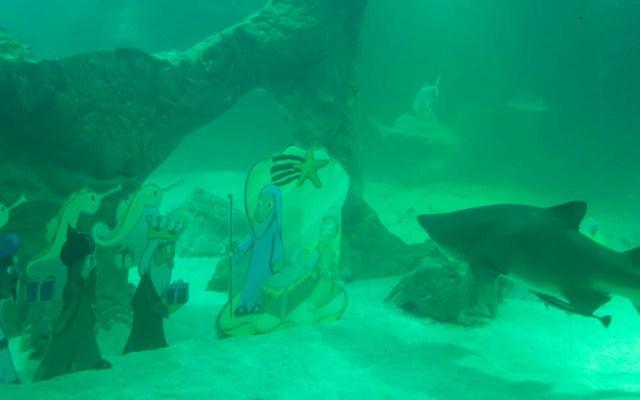 #Video Instalan nacimiento en tanque de tiburones de zoológico - Nacimiento acuático en zoológico de Madrid. Foto de @ZooMadrid