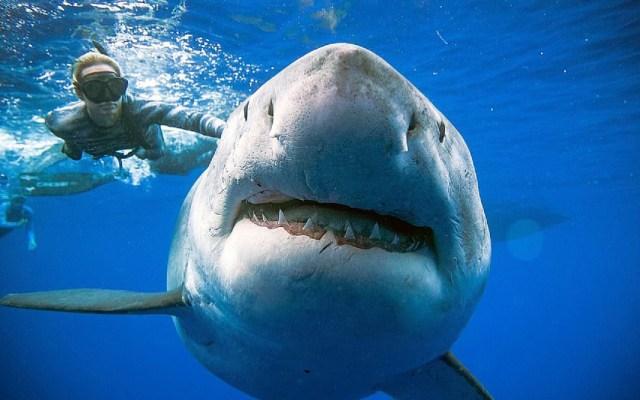 Fotografían en Hawaii al tiburón más grande del mundo - Foto de REUTERS