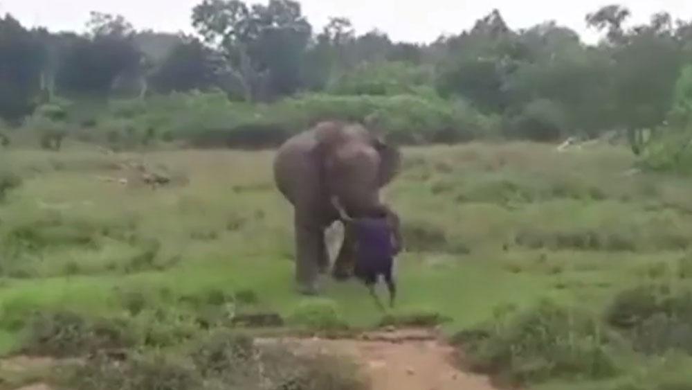 Quiso hipnotizar a un elefante y terminó de la peor forma