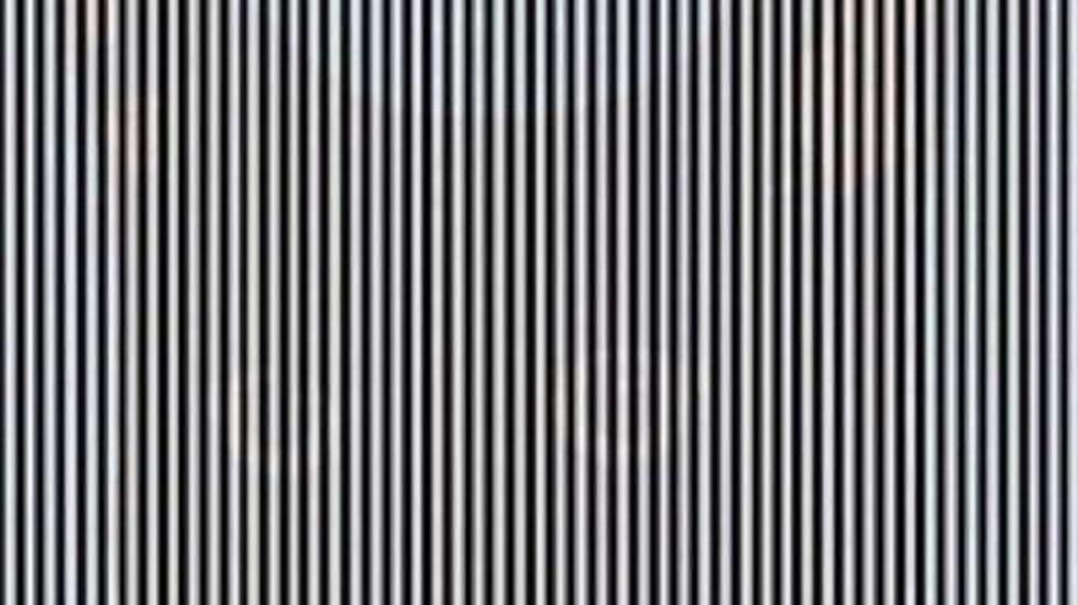 La ilusión óptica que muestra un animal