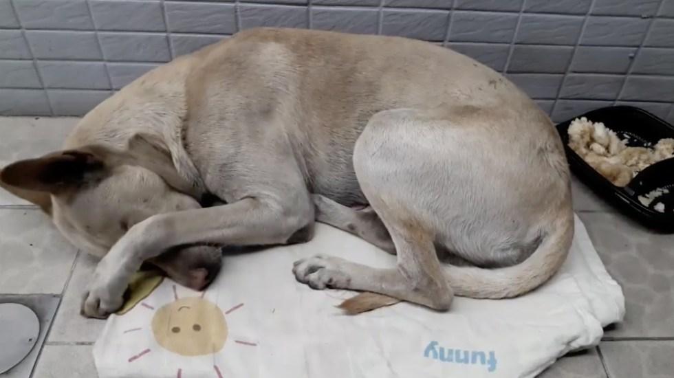 #Video Perro esperó al hombre que lo abandonó durante seis meses - Foto de Monter Wu