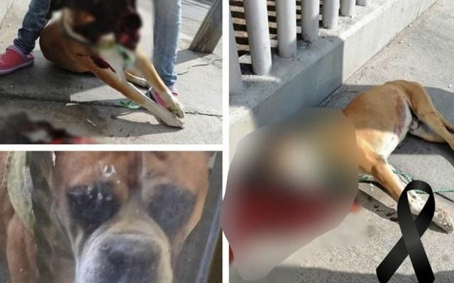 Matan a perro en San Luis Potosí poniéndole pirotecnia en la comida - Foto de Change.org