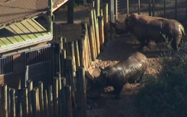 Menor resulta herido tras caer a zona de rinocerontes en zoológico - Foto de EFE