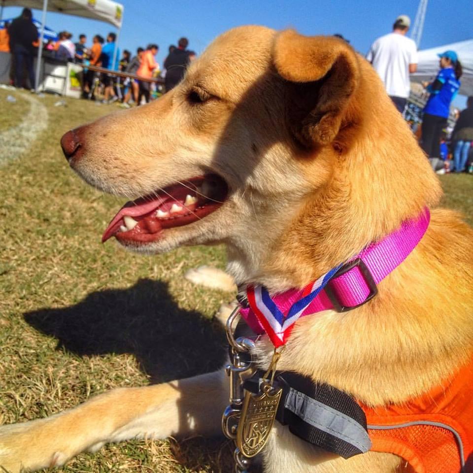Sky, la perra cuya adopción inspiró la carrera. Foto de Facebook
