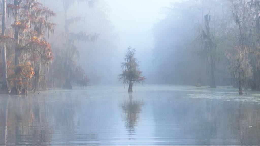Pantanos del lago Martin, en Louisiana, EE.UU. Foto de Roberto Marchegiani