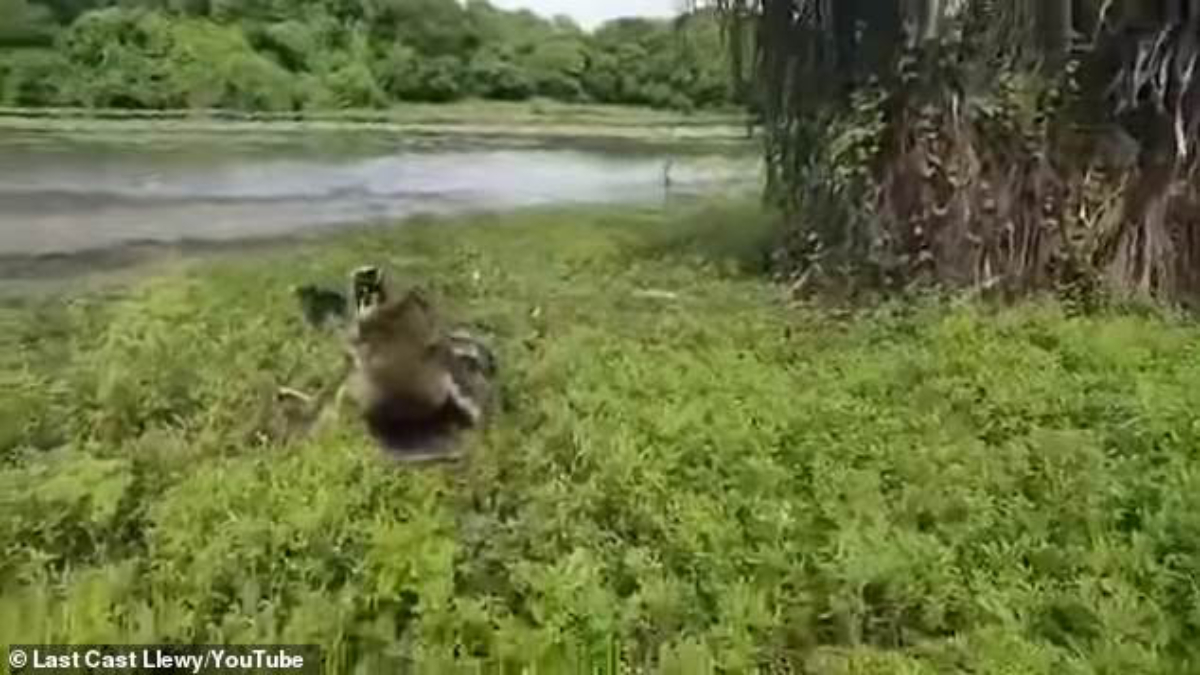 Momento en que cocodrilo gigante se lanza contra pescadores