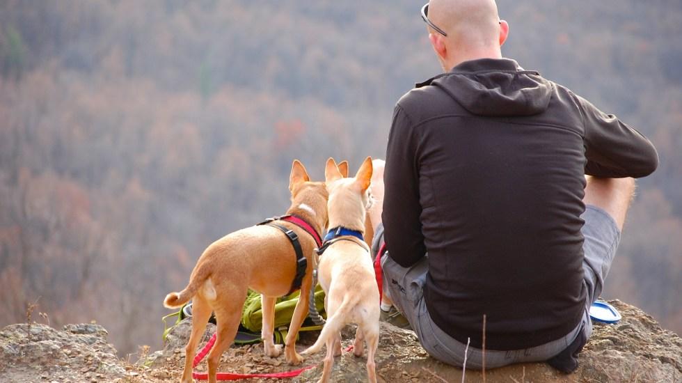 Lo que debe saber para viajar con su mascota - Foto de Pixabay.