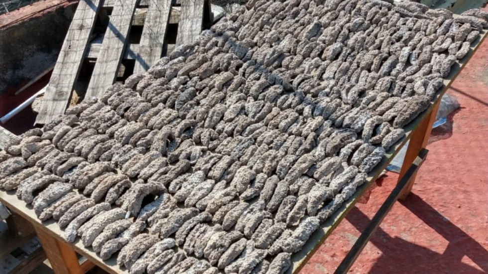 Aseguran mil 300 pepinos de mar en la Ciudad de México - pepinos de mar