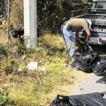 Aparecen 12 perros muertos en Morelos - Foto de Milenio