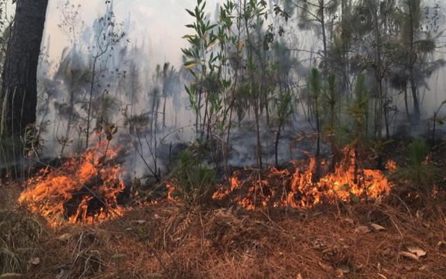 Hay 79 incendios activos en México: Protección Civil - hay 79 incendios activos en méxico