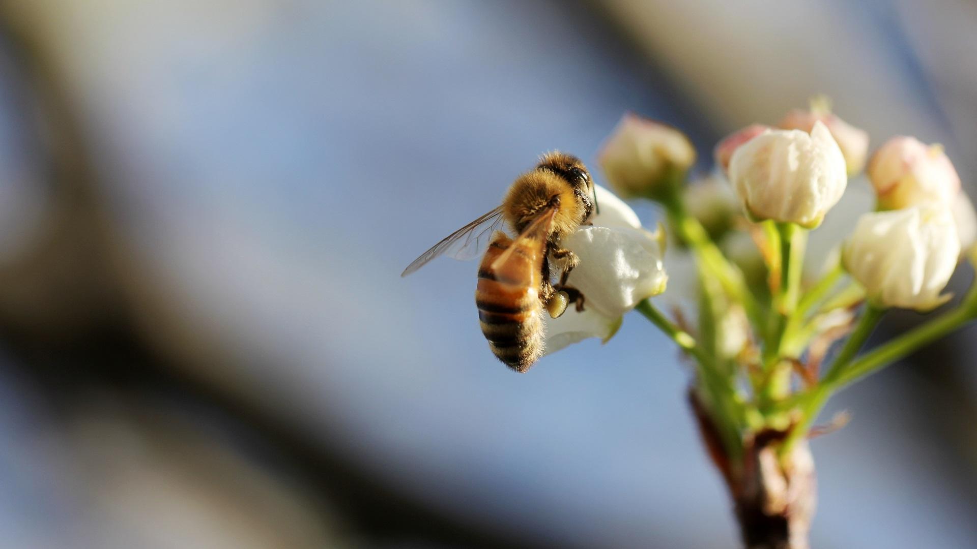 Los insectos son los que más riesgo de extinción corren, de acuerdo con los científicos. Foto de Sandy Millar / Unsplash