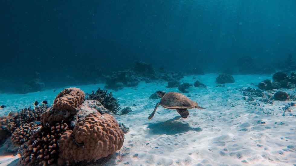 Resultado de imagen para Un millón de especies corren riesgo de extinción hombre