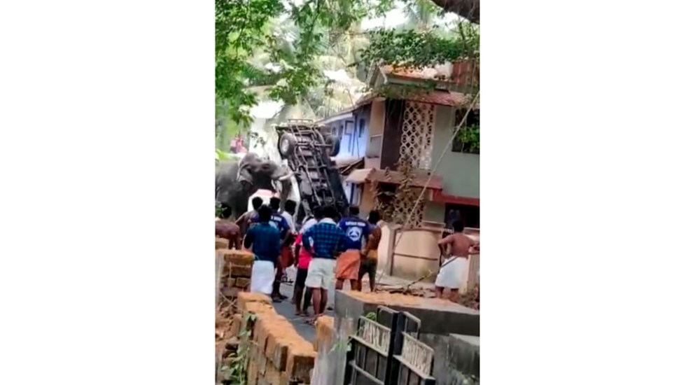 #Video Elefante escapa y causa destrozos en India - Captura de pantalla