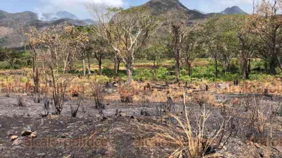 Incendio forestal alcanza 800 hectáreas en Veracruz - incendio forestal veracruz
