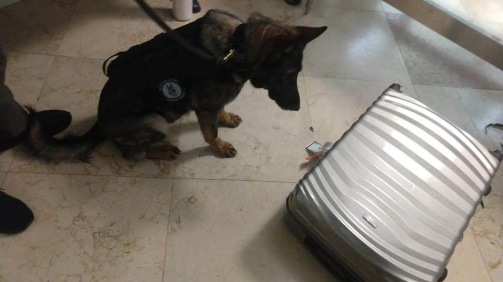 Detienen a mexicana con tres kilos de drogas en Aeropuerto de Cancún - Revisión canina de maletas en Aeropuerto de Cancún. Foto de FGR