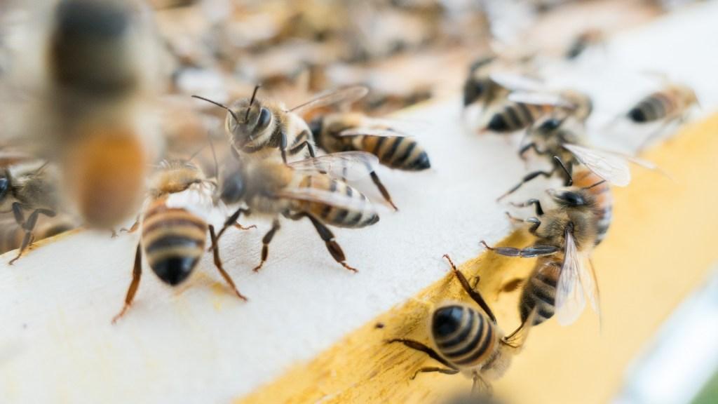 Casi dos mil especies de abejas corren peligro de extinción en México - Abejas. Foto de Massimiliano Latella / Unsplash