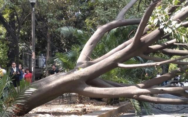 Fuertes vientos derriban árboles en la Ciudad de México; activan Alerta Amarilla - árbol en la condesa