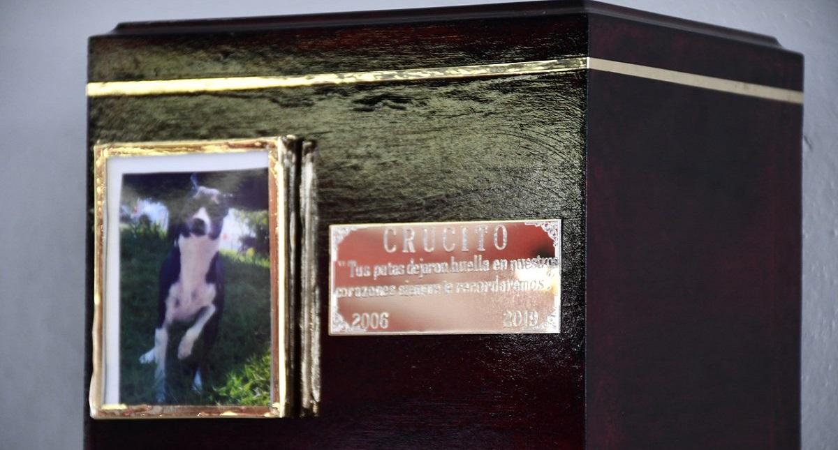 Cenizas de la mascota. Foto de @GobiernoJalisco