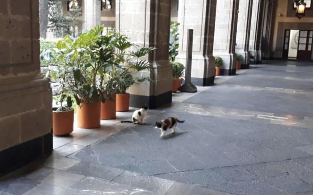 Hacienda aclara tema de los gatos de Palacio Nacional - Foto de @Carmen_Hern