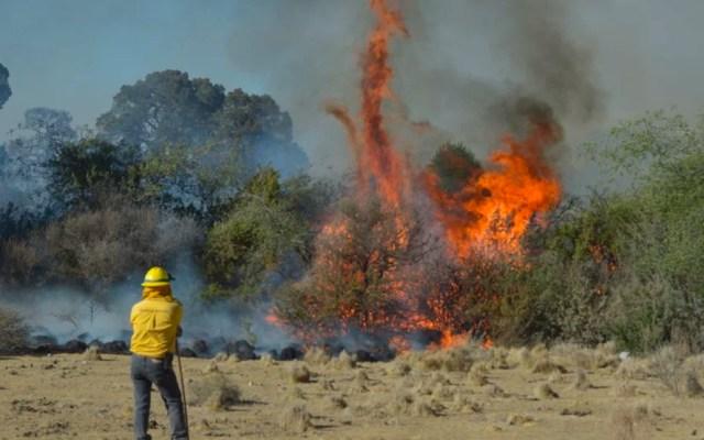 Incendio forestal activo en Coahuila ha consumido más de 310 hectáreas - Incendio forestal