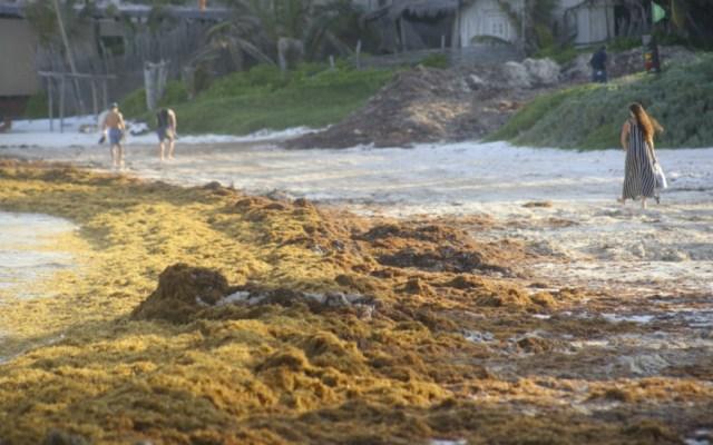 Expertos alertan de problemas por sargazo en el Caribe - Foto de Notimex