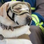 El destino de la perrita rescatista Frida tras su retiro