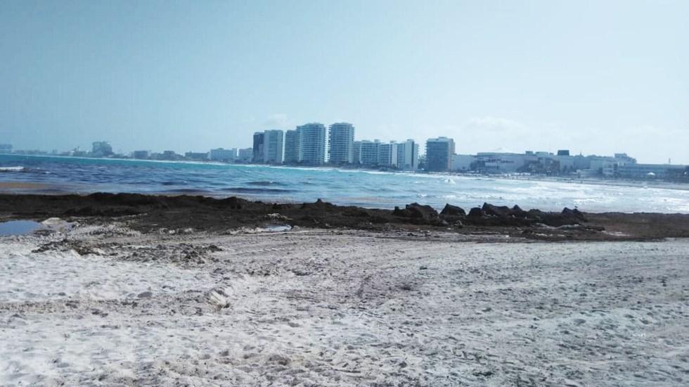 Sargazo llega de forma masiva a zona norte de Quintana Roo - Sargazp en Quintana Roo. Foto de Notimex