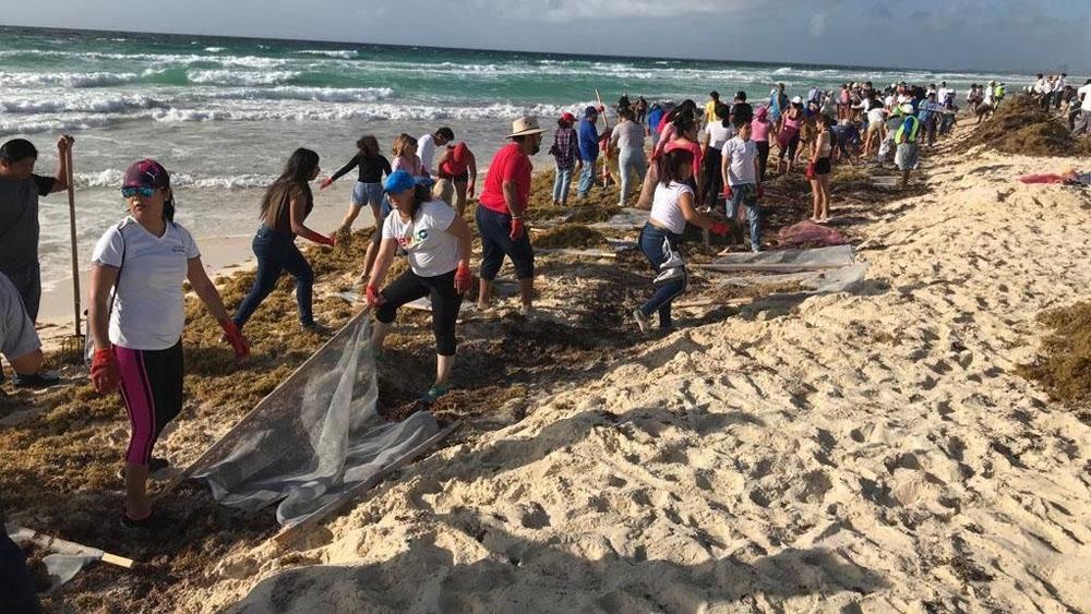 Quintana Roo publica protocolos para combatir el sargazo - sargazo Quintana Roo