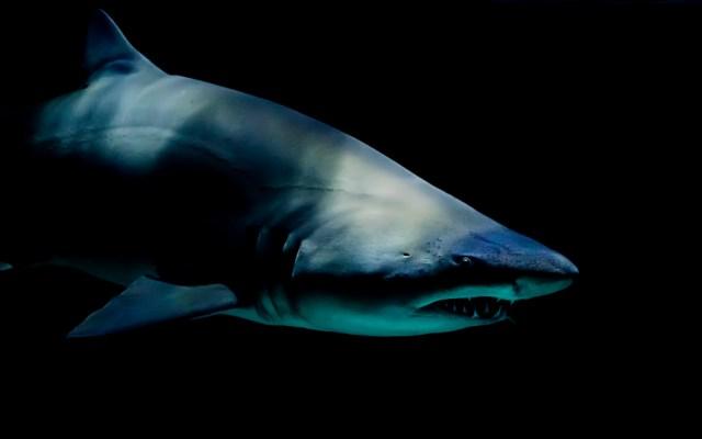 Tiburón muerde a niño en EE.UU.; es el tercer ataque en un mes - Foto de Laura College para Unsplash
