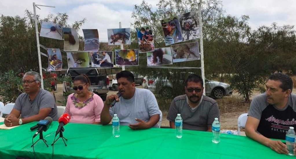 Denuncian la muerte de más de 80 animales en zoológico de Tijuana - zoológico parque morelos animales