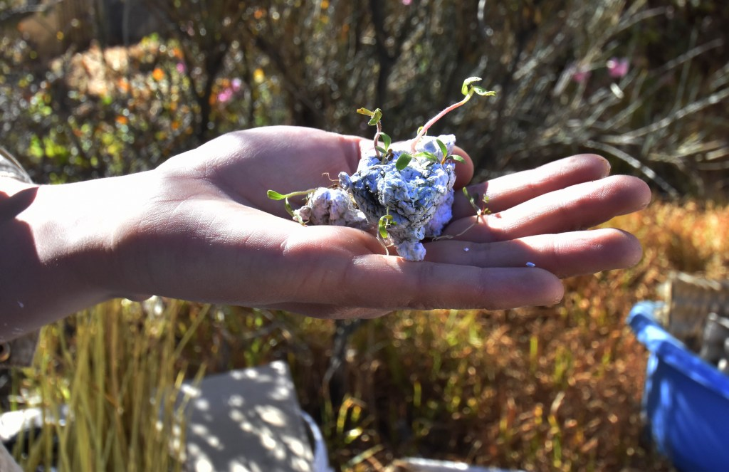 Papeles reciclados que florecen - Foto de EFE.